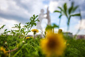 Berlin Molecule Men and dandelion — Stockfoto