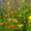 Summer flower field — Stock Photo