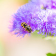 Bee on a flower — Foto de Stock