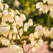 White blossoms on a twig — Stock fotografie