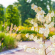White blossoms on a twig — Stock Photo