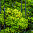 Conifer pushing through fence in Berlin — Foto Stock