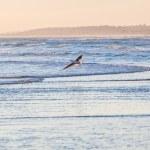 北の海でかもめ — ストック写真