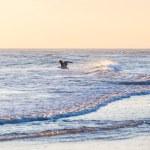 seagul na Morzu Północnym — Zdjęcie stockowe