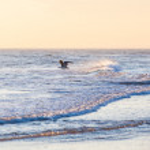 martı Kuzey Denizi — Stok fotoğraf