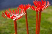 Orange plastic flowers — Stock Photo