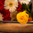yellow rose — Stock Photo