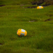 Stock Photo: Yellow plastic container discarded in green grass