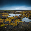 Tundra landscape in Iceland with scattered lakes — Stock Photo