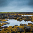 Tundra landscape in Iceland with scattered lakes — Stock Photo #39206369