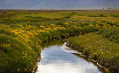 вдоль берега реки — Стоковое фото