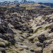 Stock Photo: Old lavfield in Iceland