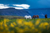 Horses stand on a meadow — Stock Photo