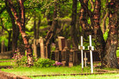 Rural graveyard under trees in Iceland — Stock Photo