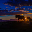 Icelandic mare with foal in front of setting sun — Stock Photo