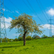 Electricity pylons crossing field — Stock Photo #48683411