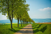 Tree lined country road — Stock Photo