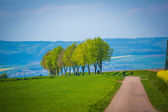 Country road through green farmland — Stock Photo