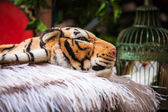 Plush tiger — Stock Photo