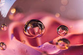 Rose in glass ball — Stock Photo