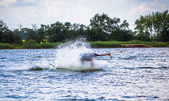 Man falls of his wakeboard — Foto Stock
