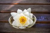 White lotus blossoms — Stock Photo