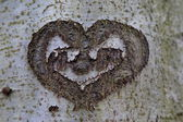 Heart carved on the tree — Stock Photo