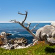 ������, ������: Pescadero Point at 17 Mile Drive