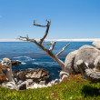 Stock Photo: Pescadero Point at 17 Mile Drive.