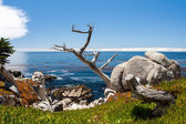 Pescadero Point at 17 Mile Drive. — Stock Photo