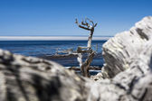 Pescadero Point at 17 Mile Drive in Big Sur California — Stock Photo