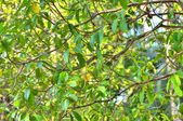 Green snake on tree — Stock Photo