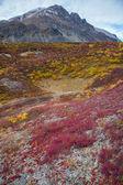Vildmarken tundra — Stockfoto