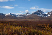 Tundra i höst — Stockfoto