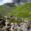 Stock Photo: Alpine Greenery