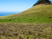 табун лошадей в поле — Стоковое фото