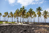 Palm Trees Amidst Lava Field — Stock Photo