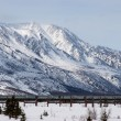 Oil Pipeline in Wilderness — Stock Photo #25263125