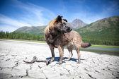 Husky gölü — Stok fotoğraf