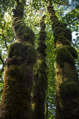 Mossy Timbers — Stock Photo