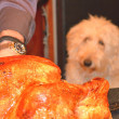Turkey and dog — Stock Photo
