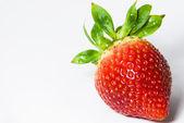在白色草莓 — 图库照片