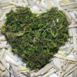Heartmoss — Stock Photo