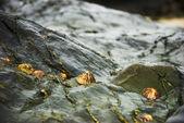 Vita sulle rocce — Foto Stock