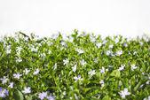 Showy flowers — Stock Photo