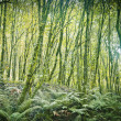 Dense forest — Stock Photo #34144685