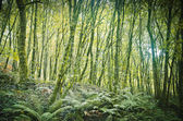 Dense forest — Stock Photo