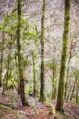 Dense forest — Stock Photo
