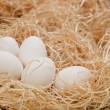 Stock Photo: Eggs lying on some hay