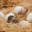 White Eggs lying on straw — Stock Photo